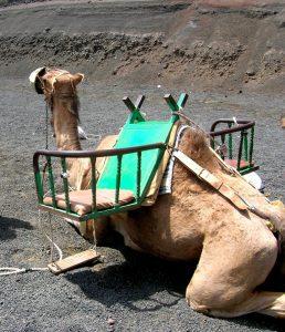 Parque Nacional de Timanfaya. Ruta de los Camellos.