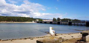 Isla A Toxa. Pontevedra. Galicia. España.