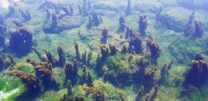 Islas Cíes. Laguna.