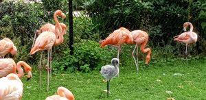 Amberes. Zoo.